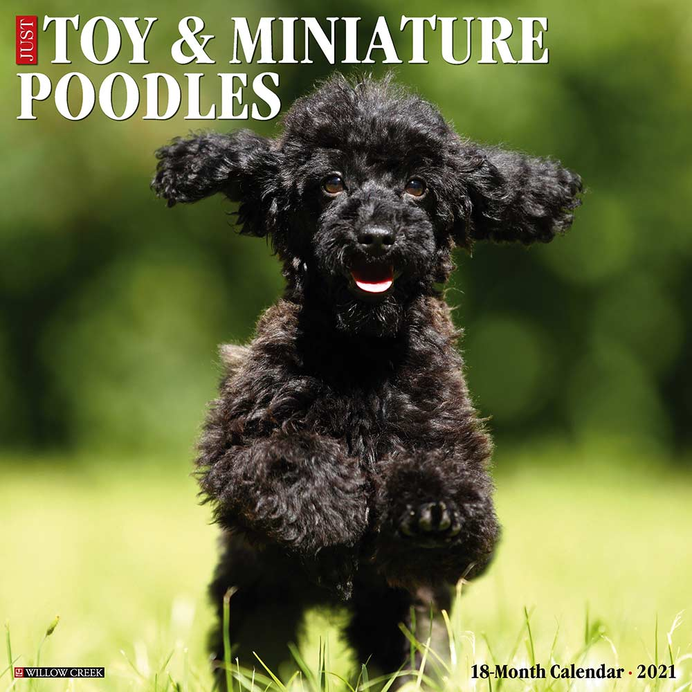 2021 Toy & Miniature Poodles Calendar Willow Creek