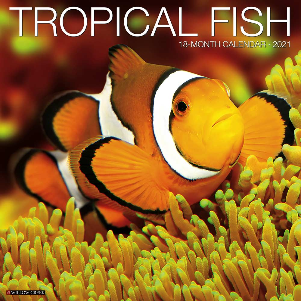 2021 Tropical Fish Calendar Willow Creek
