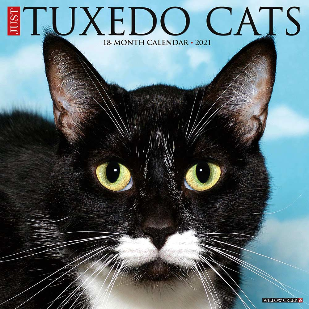2021 Tuxedo Cats Calendar Willow Creek