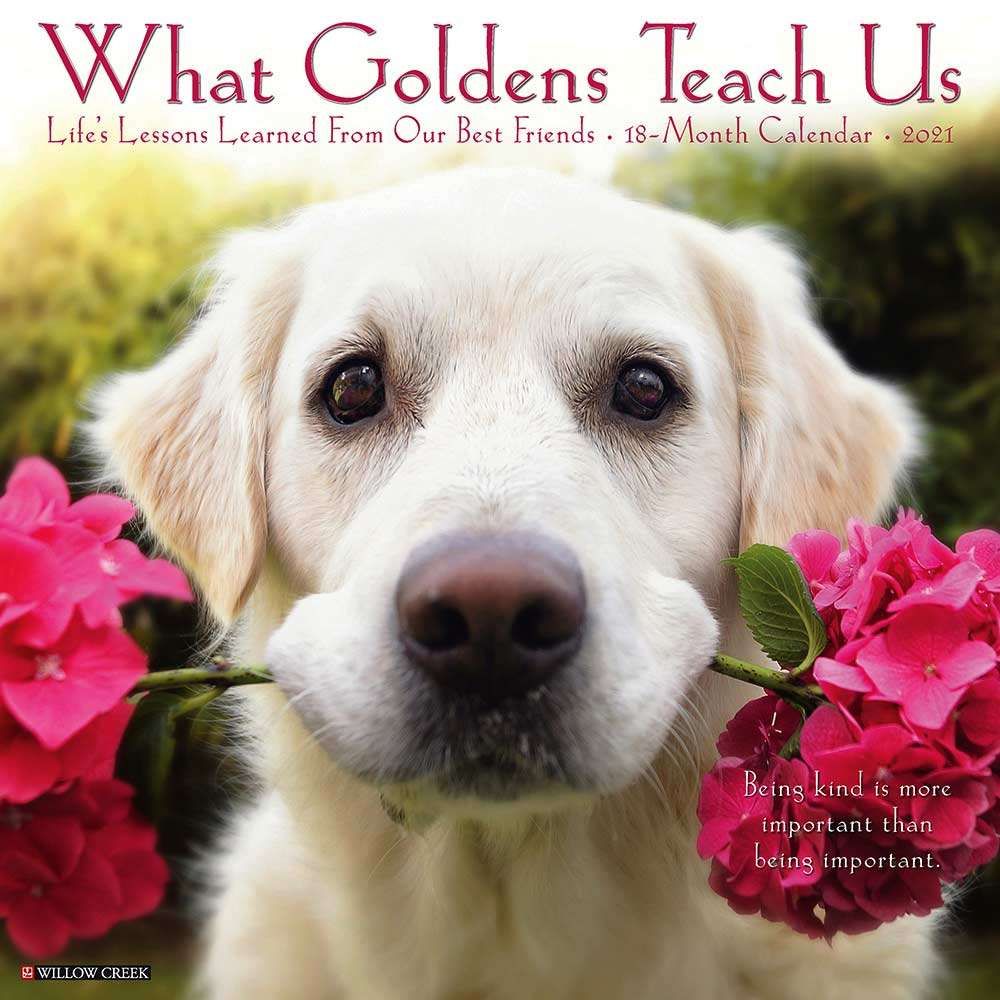 2021 What Goldens Teach Us Calendar Willow Creek