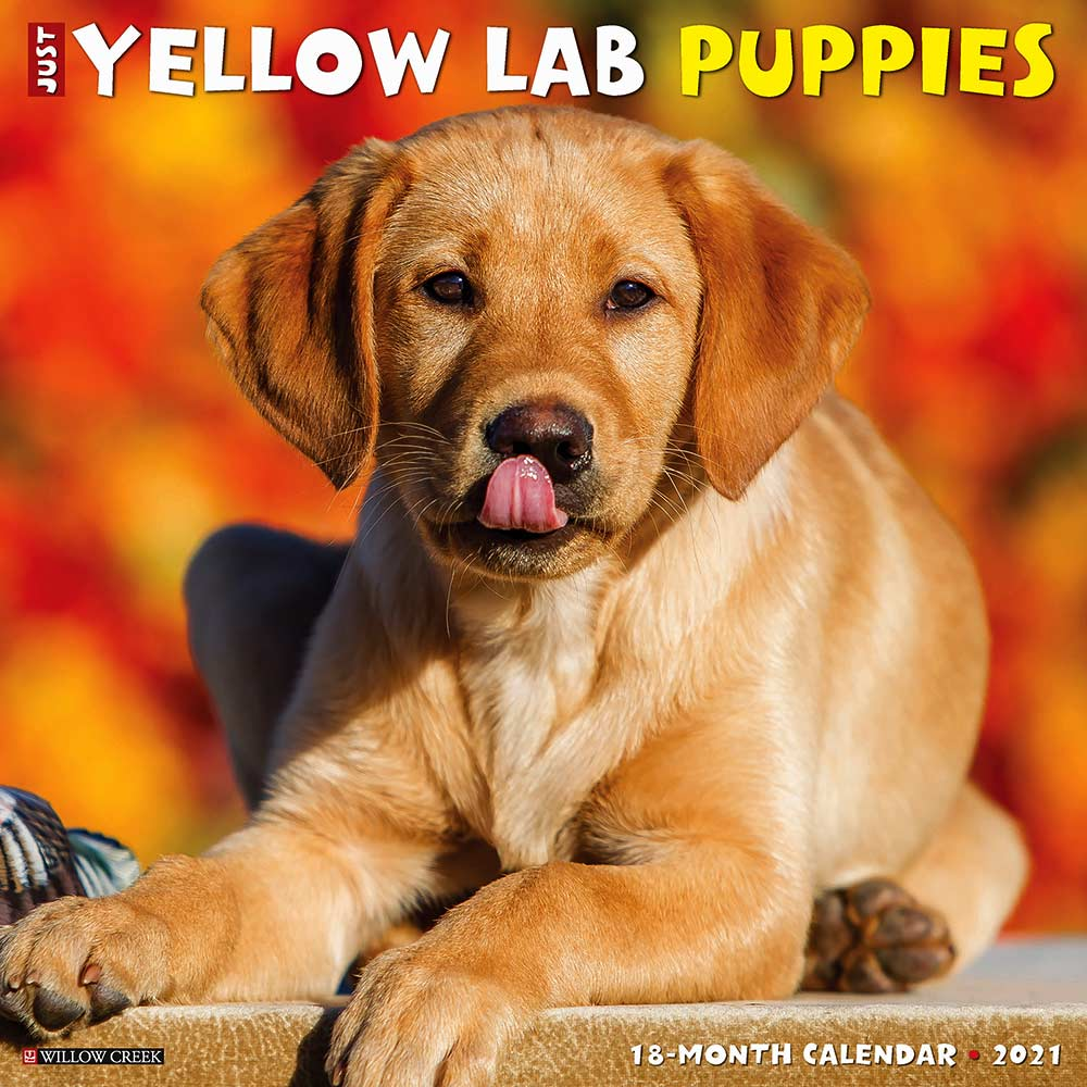 2021 Yellow Lab Puppies Calendar Willow Creek