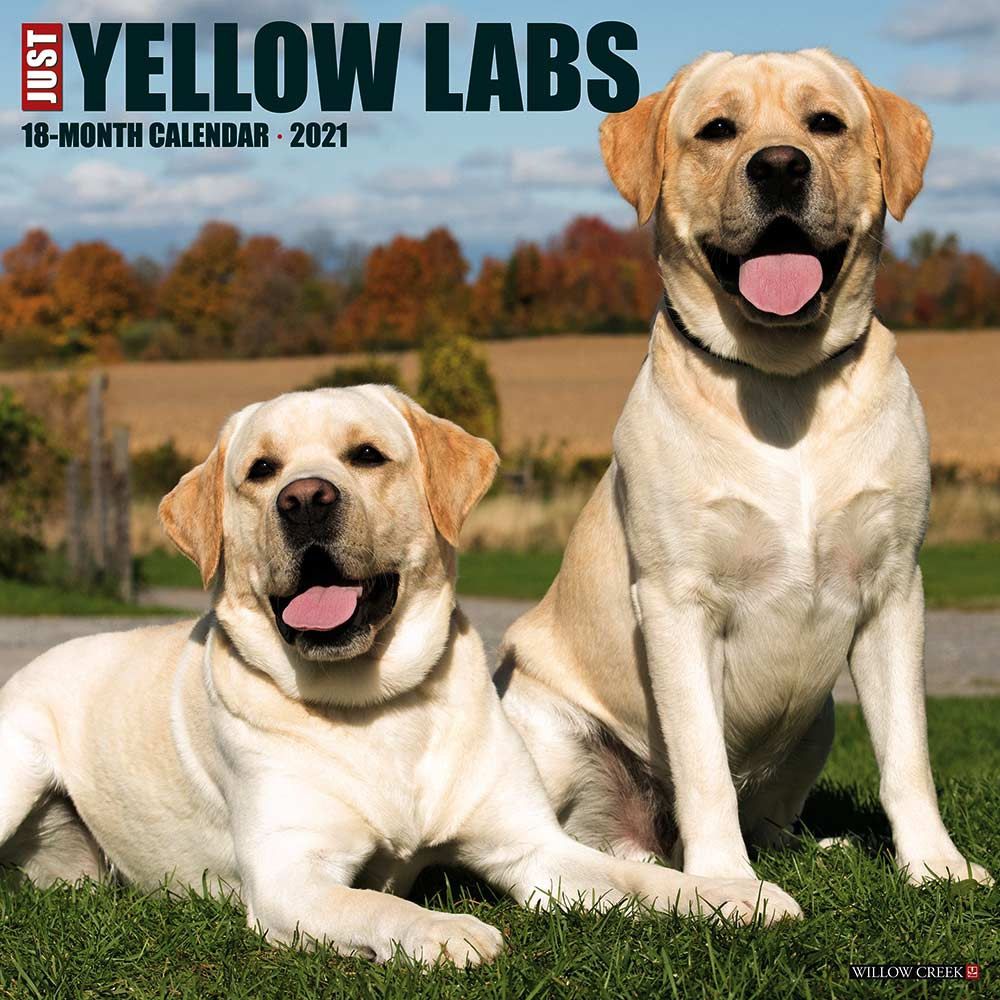 2021 Yellow Labs Calendar