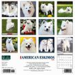 2021 American Eskimos Calendar Willow Creek
