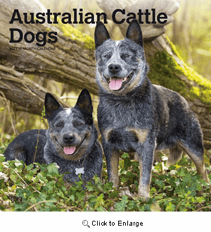 2021 Australian Cattle Dogs Calendar