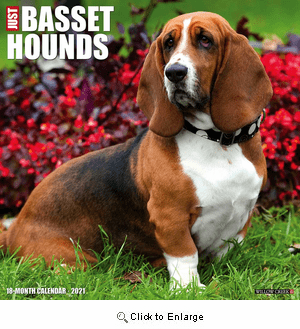 2021 Basset Hounds Calendar Willow Creek Press