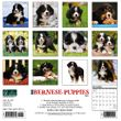 2021 Bernese Mountain Dog Puppies Calendar