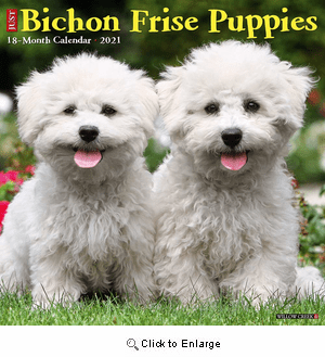 2021 Bichon Frise Puppies Calendar Willow Creek