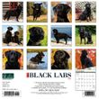 2021 Black Labs Calendar Willow Creek Press