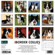2021 Border Collies Calendar Willow Creek Press