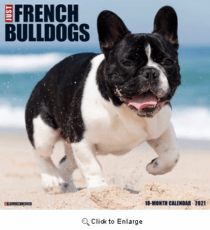 2021 Frenchies Calendar