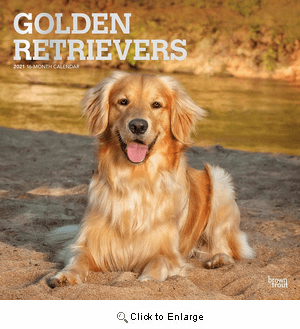 2021 Golden Retrievers Calendar