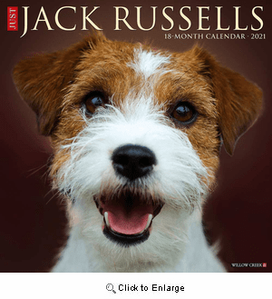 2021 Jack Russells Calendar Willow Creek