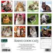 2021 Maine Coon Cats Calendar Willow Creek