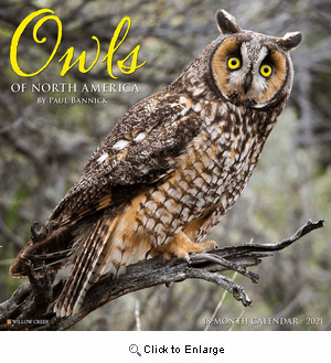 2021 Owls Calendar Willow Creek
