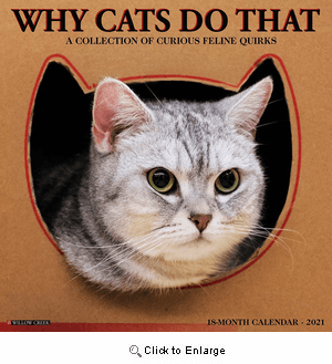 2021 Why Cats Do That Calendar Willow Creek