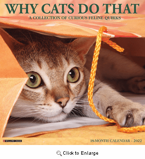 2022 Why Cats Do That Calendar Willow Creek
