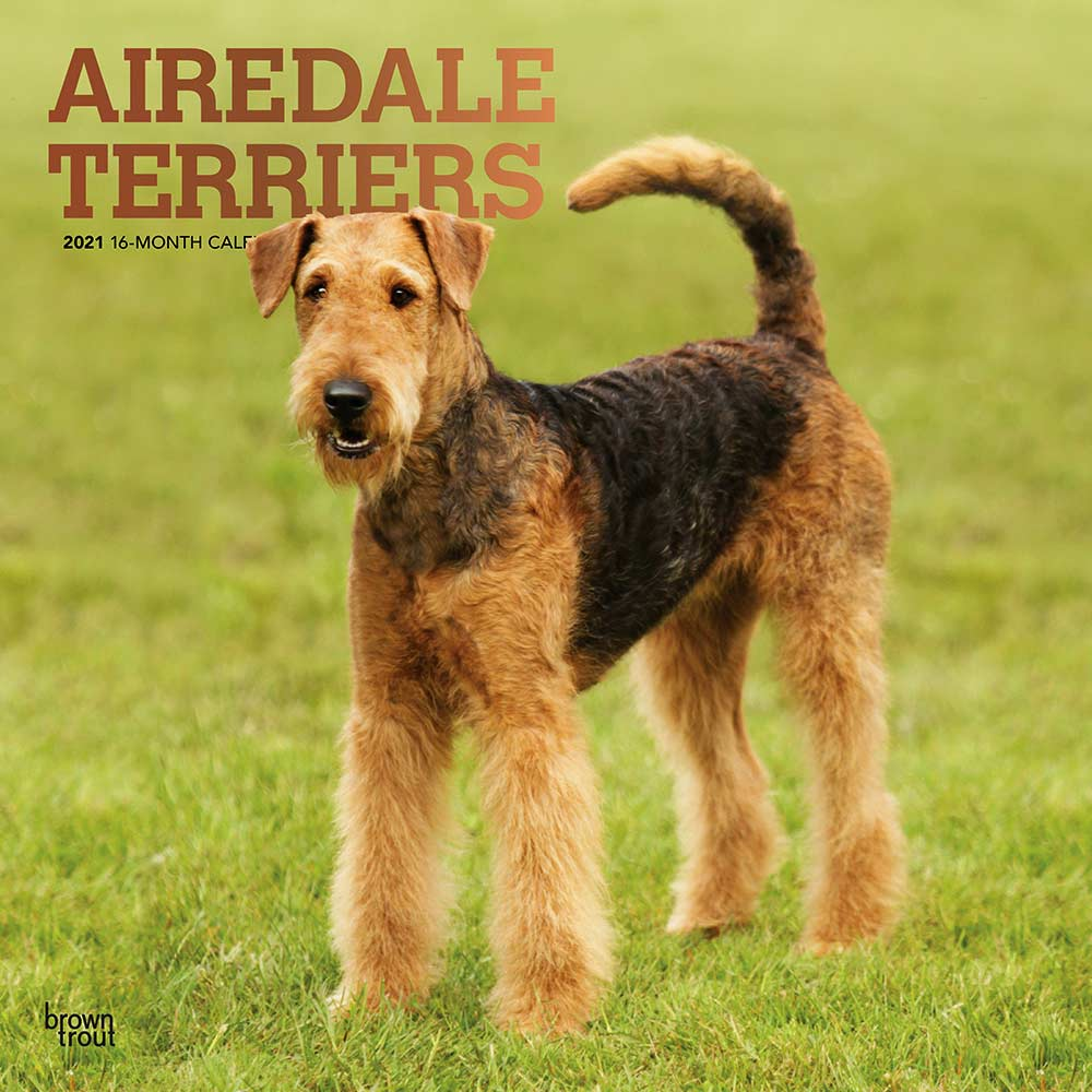 2021 Airedale Terriers Calendar