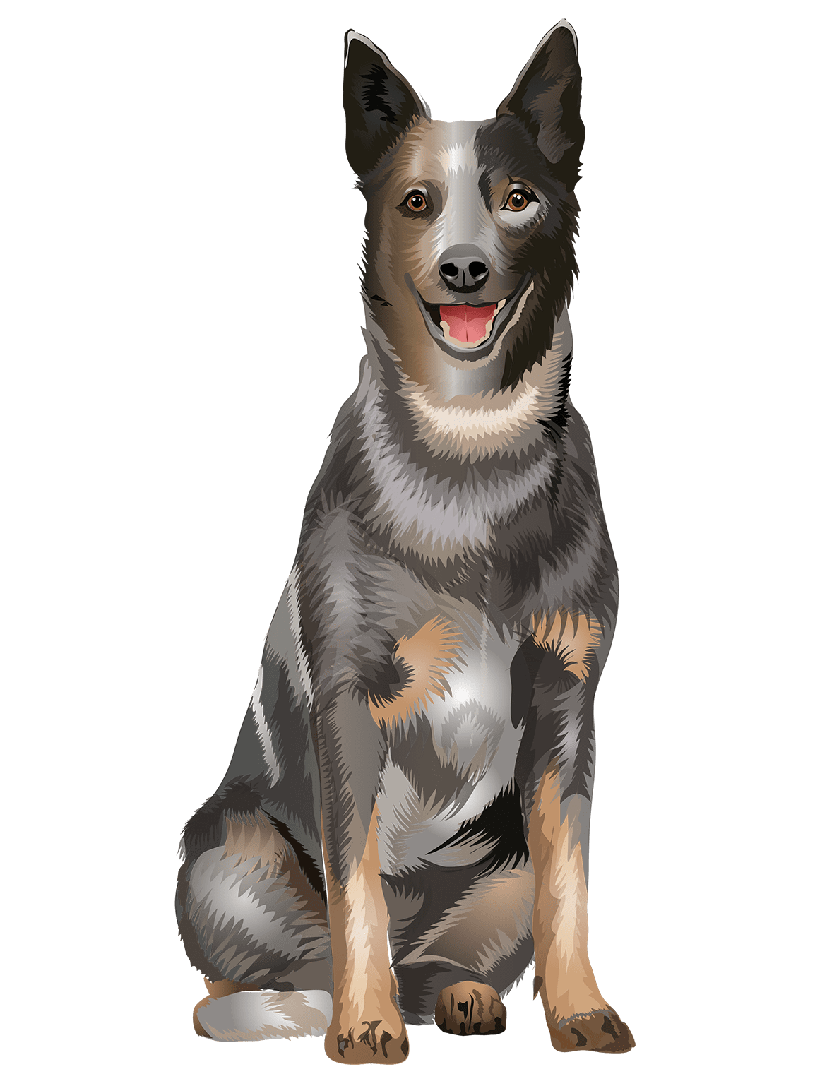 Australian Cattle Dog T-Shirt Sitting Down- Vibrant Vector