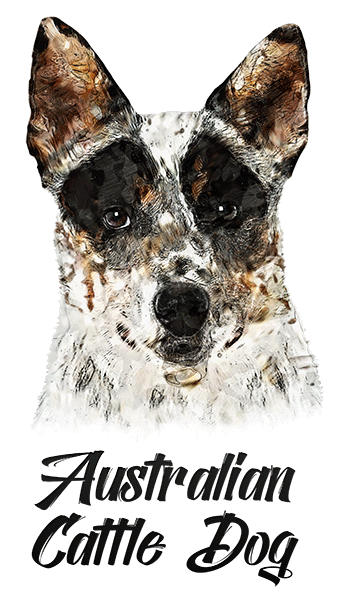 Australian Cattle Dog T-Shirt - Vivid Colors