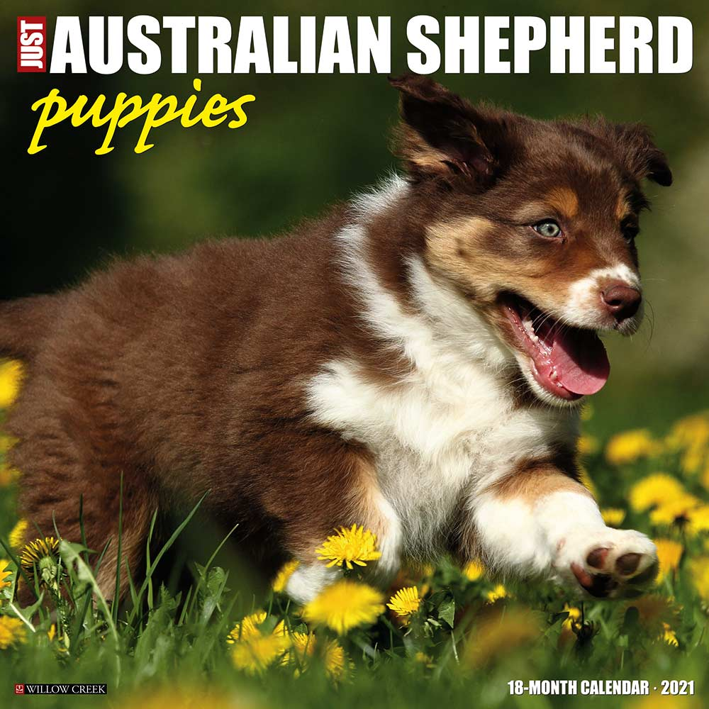 Australian Shepherd Puppies Willow Creek Calendar