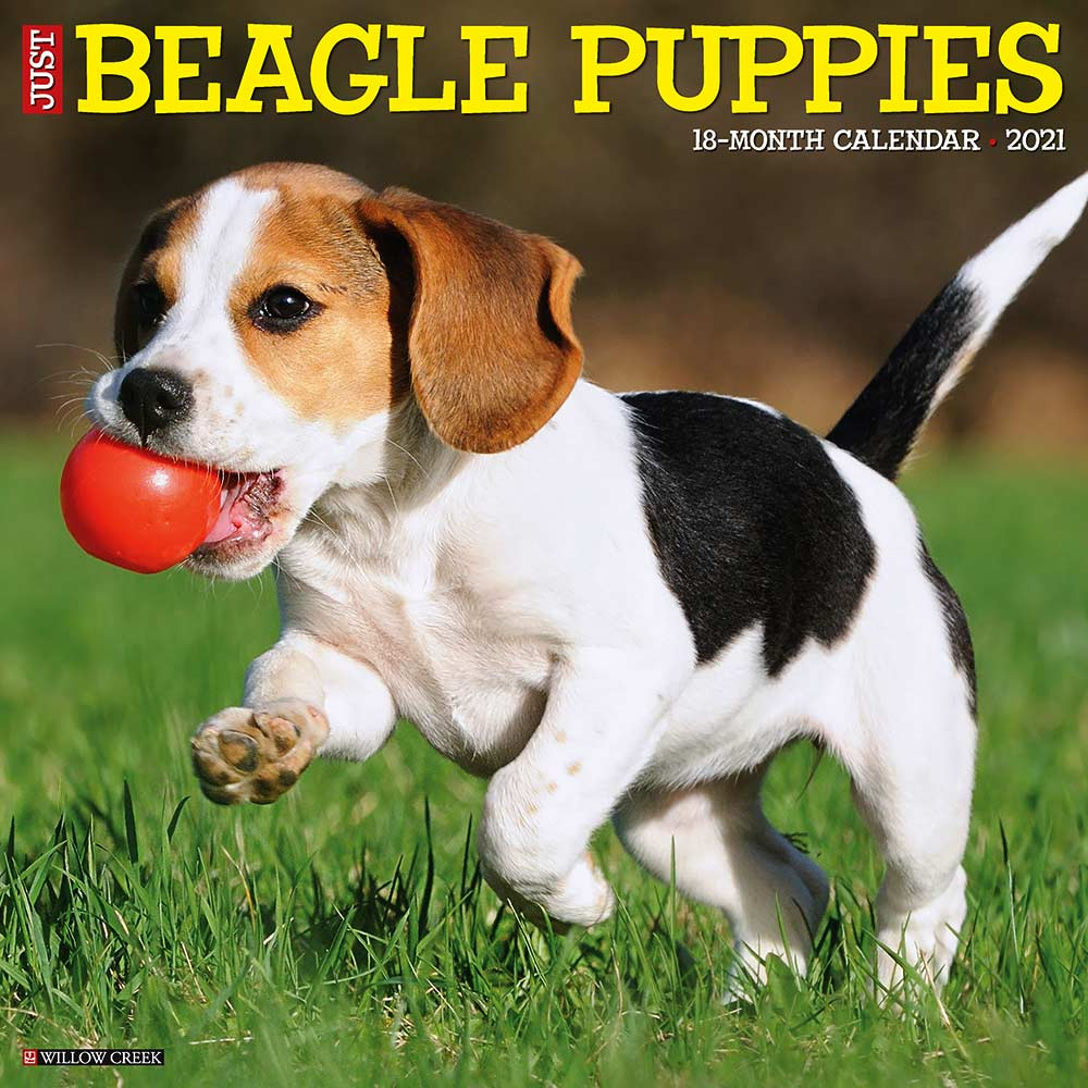 2021 Beagle Puppies Calendar