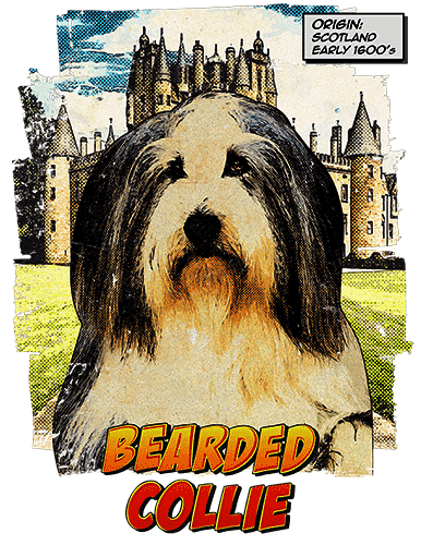 Bearded Collie T-Shirt Ancestry