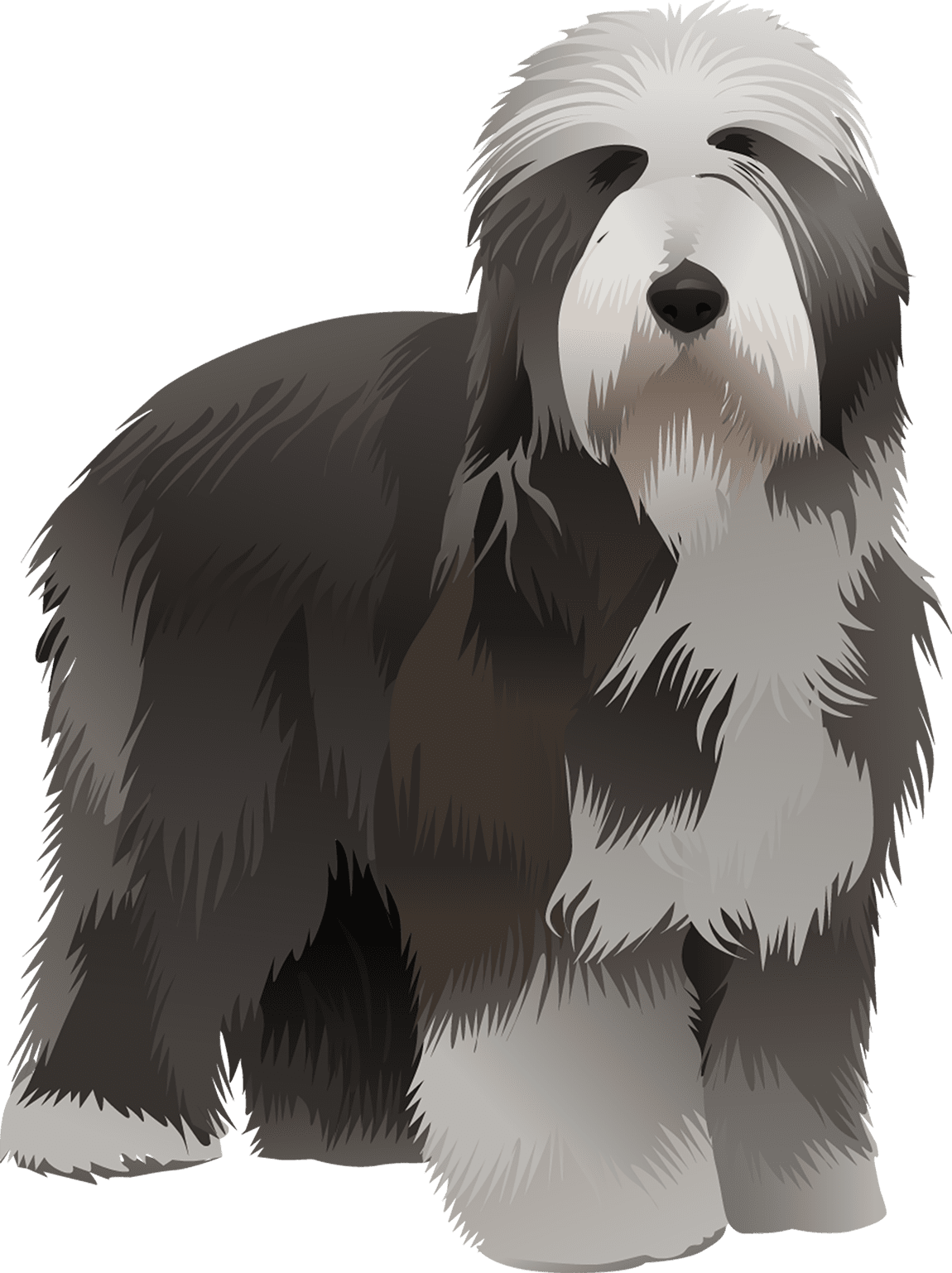 Bearded Collie T-Shirt - Vibrant Vector