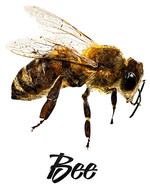 Bee T-Shirt - Vivid Colors