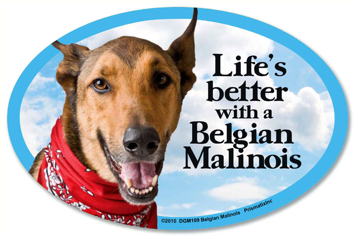 Belgian Malinois Car Magnet - Life's Better
