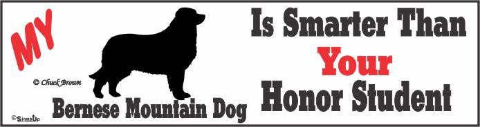 Bernese Mountain Dog Bumper Sticker Honor Student