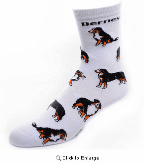 Bernese Mountain Dog Socks Poses 2