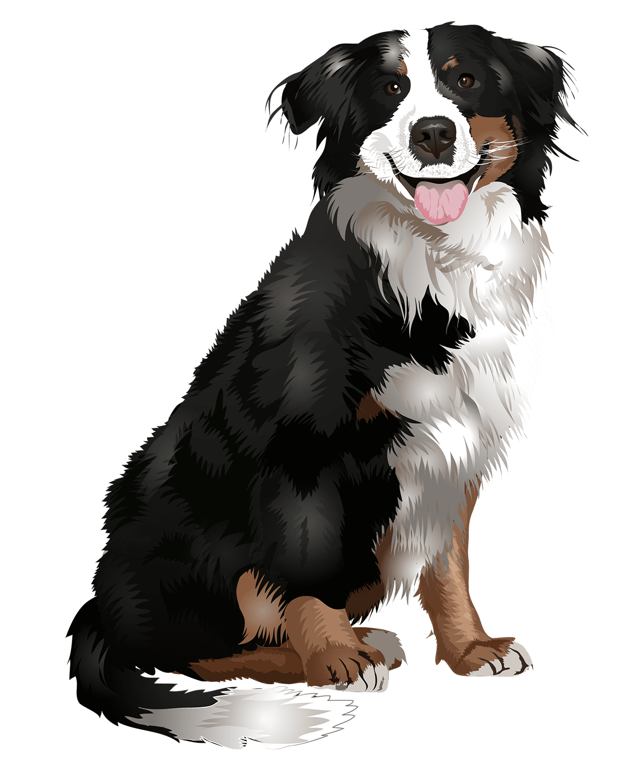 Bernese Mountain Dog T-Shirt Sitting - Vibrant Vector