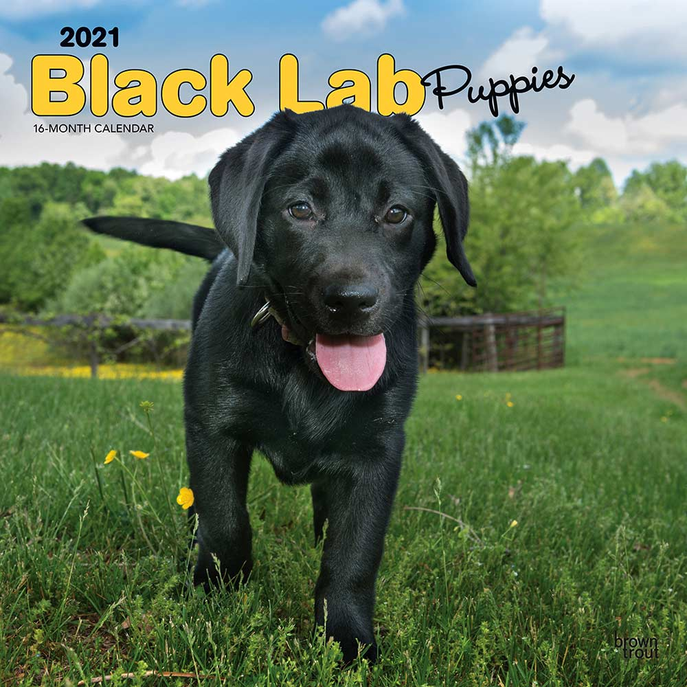 2021 Black Lab Puppies Calendar