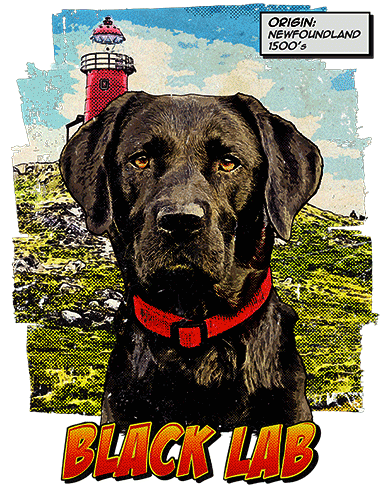 Black Lab T-Shirt Ancestry