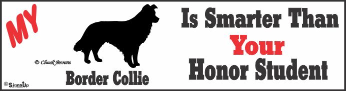 Border Collie Bumper Sticker Honor Student