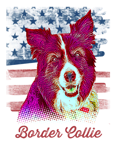 Border Collie T Shirt American Flag