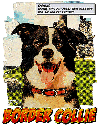 Border Collie T-Shirt Ancestry