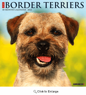 Border Terrier Willow Creek Calendar