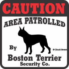 Boston Terrier Bumper Sticker Caution