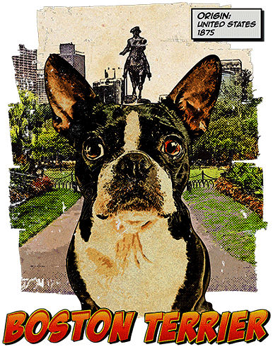 Boston Terrier T-Shirt Ancestry
