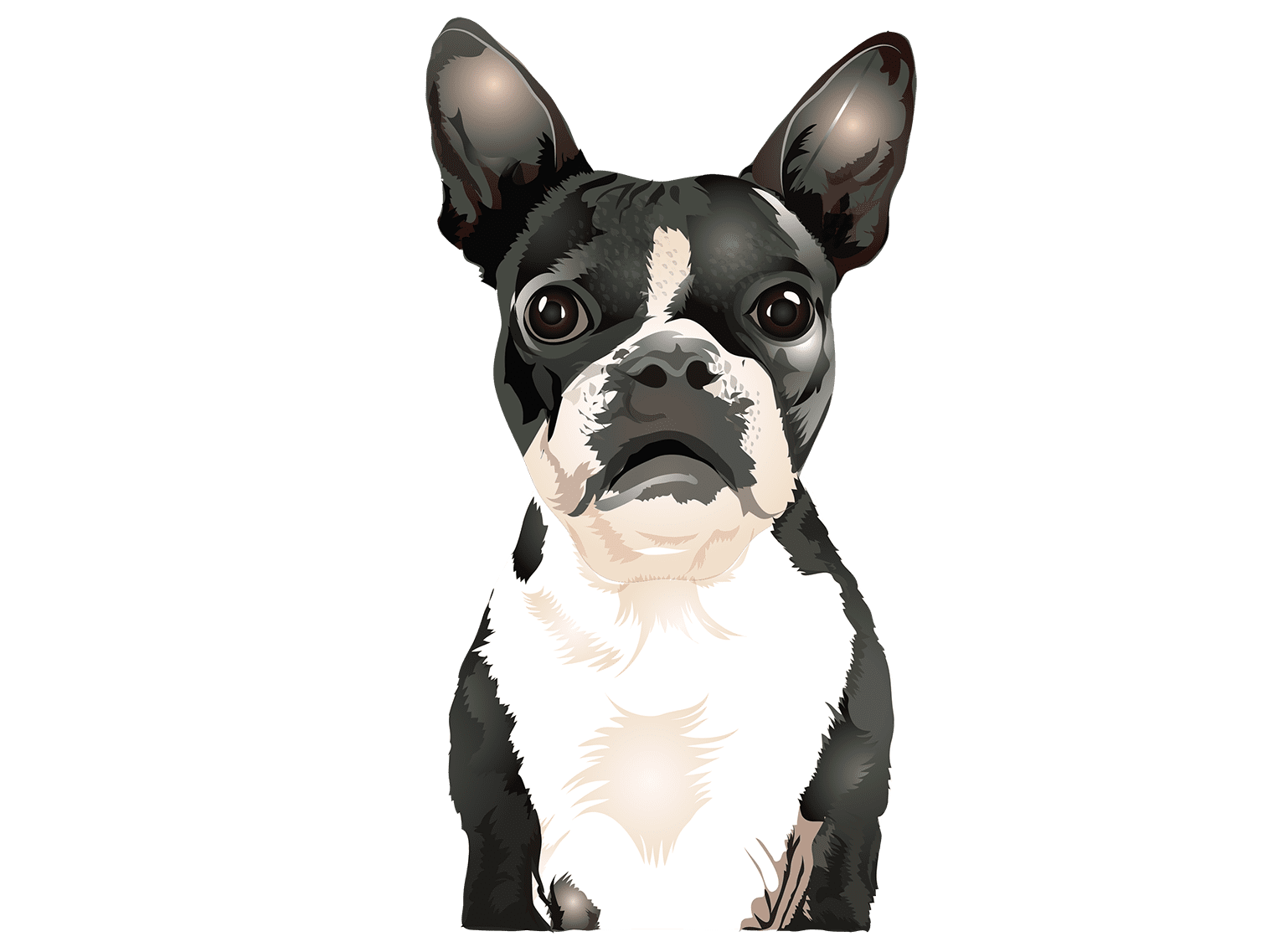 Boston Terrier T-Shirt - Vibrant Vector