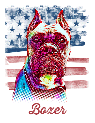 Boxer T Shirt American Flag Cropped