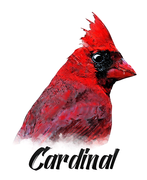 Cardinal T-Shirt - Vivid Colors