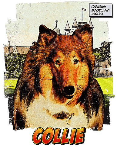 Collie T-Shirt Ancestry