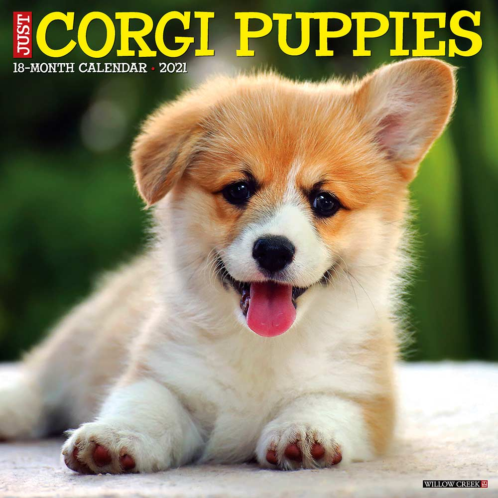 2021 Corgi Puppies Calendar