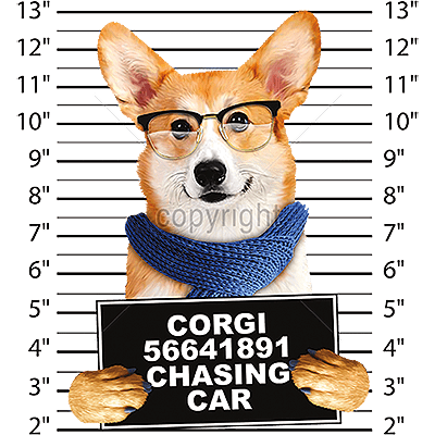 Corgi T Shirt - Mug Shot