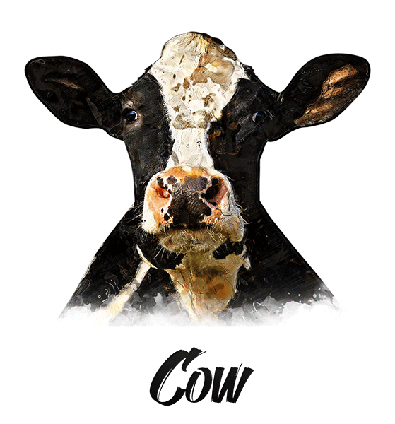 Cow T-Shirt - Vivid Colors