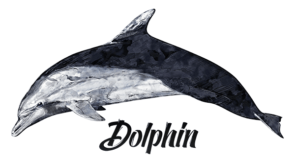 Dolphin T-Shirt - Vivid Colors