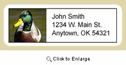 Duck Address Labels