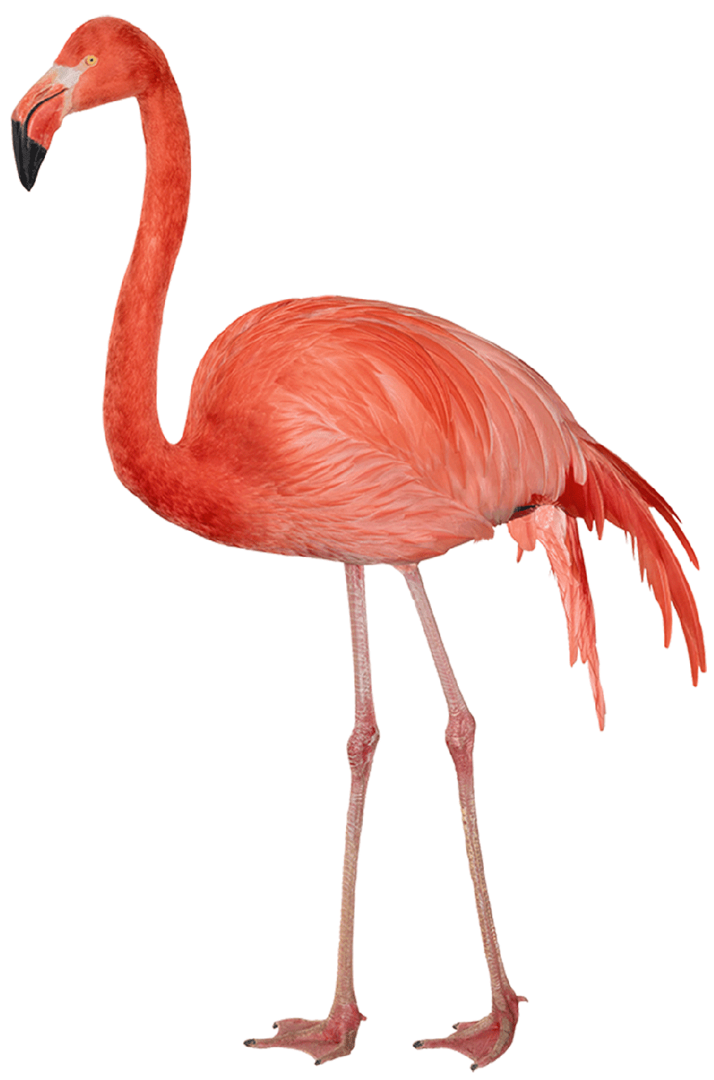 Flamingo T-Shirt - Vibrant Vector